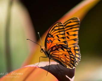 Monarch Butterfly Nature Photography Fine Art Wall Print