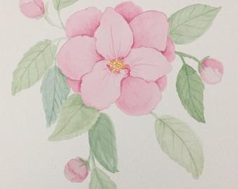 Camellia My Love