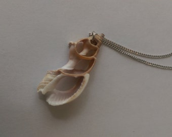 Cut Shell Necklace