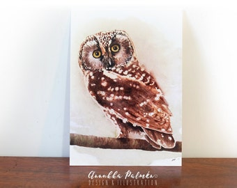 Watercolor boreal owl, postcard, parrot art, bird illustration