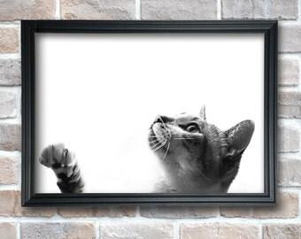 Wall Art Prints, Black and White Prints,Cat INSTANT DOWNLOAD,Digital Printable,Modern Art, Wall Decor