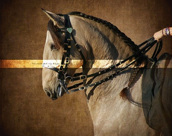 Dressage horse  art photography for prints