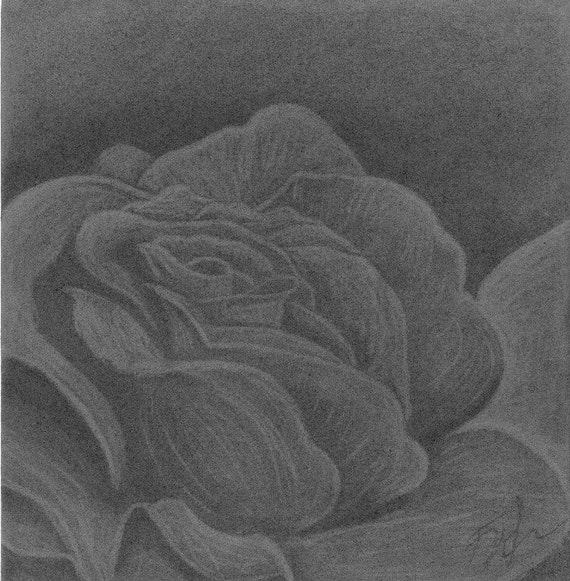 Flower Charcoal Drawing 12x12 Original Charcoal by ...
