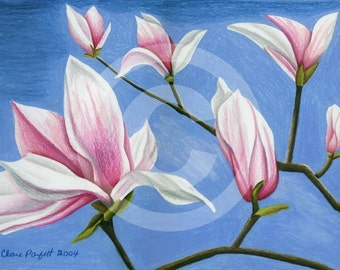 Magnolia Blossoms-inkjet print