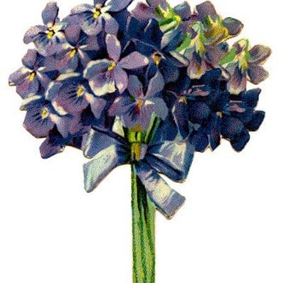 violettegarden
