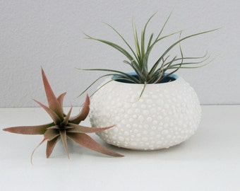 Porcelain Air Plant Vase - Sweet Pea in Sky Blue Small - Small Round Pottery Vase - Ceramic Air Plant Container with Dots