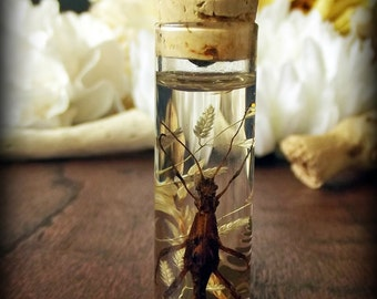 Walking Stick Specimen Pendant