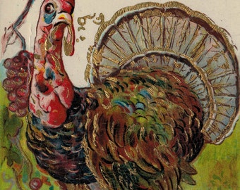 Antique Thanksgiving Postcard Emboseed and Illustrated Gold Embellishments  Full Turkey Illustration