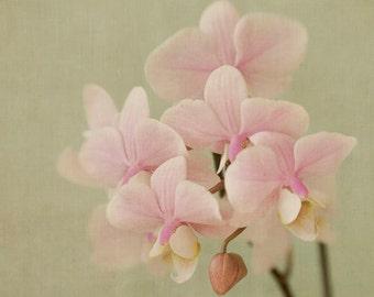 Orchid Print, Floral Art Print, Pastel  Wall Decor, Fine Art Photography, Cottage Chic Decor, Orchid Art, Flower Wall Art