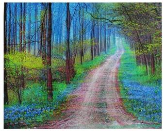 Spring green, Bluebonnet trail, 16x20 inches, mixed media photograph, rustic decor, hiking trails, dirt roads, mixed media original