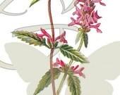 Digital Flower Illustration Vintage Botanical Wildflower and Leaves Printable Clip Art Image Download