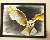Barn Owl Original Paintin...