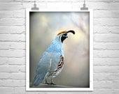 Quail Bird Photography, Quail Picture, Quail Art, Quail Print, Bird Print, Wildlife Art, Nature Photography, Arizona Birds, Vertical Art