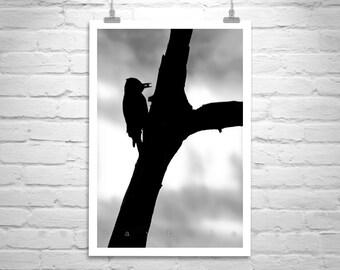Silhouette, Fine Art Photography, Black and White, Bird Picture, Woodpecker Bird, Bird Photography, Nature Photography, Murray Bolesta