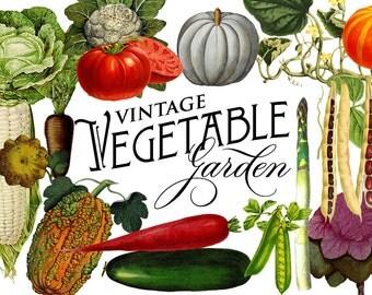 INSTANT DOWNLOAD - Vintage Vegetable Botanical Graphics