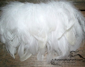 """Real White Feathers Natural Cruelty Free Feathers Eco Real Bird Feathers White Wyandotte Rooster Feathers For Crafts Eco 20 @ 4 - 4.5"""" / WW9"""