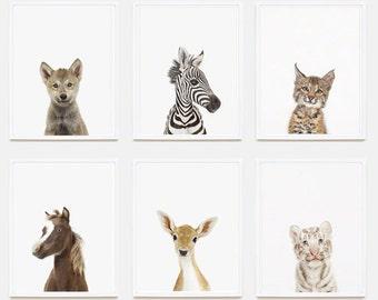 Animal Nursery Prints. Baby Deer Little Darling. Fawn Print. Animal Wall Art.  Animal Nursery Decor. Baby Animal Photos.