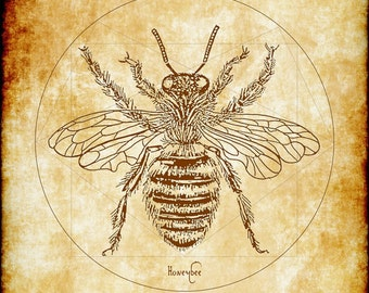 Vitruvian Bee Poster for Gardeners and BeeKeepers