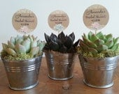 30 Succulent Plant Favor Tags, Bridal Shower, Burlap and Lace, Pink, Blue, Assembled on Picks, Rustic, Cupcake Toppers