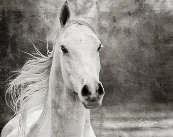 Gray Arabian Horse, Black and White Horse Photography, Fine Art Horse Photography, Horse Print, Horse Picture, Horse Poster,