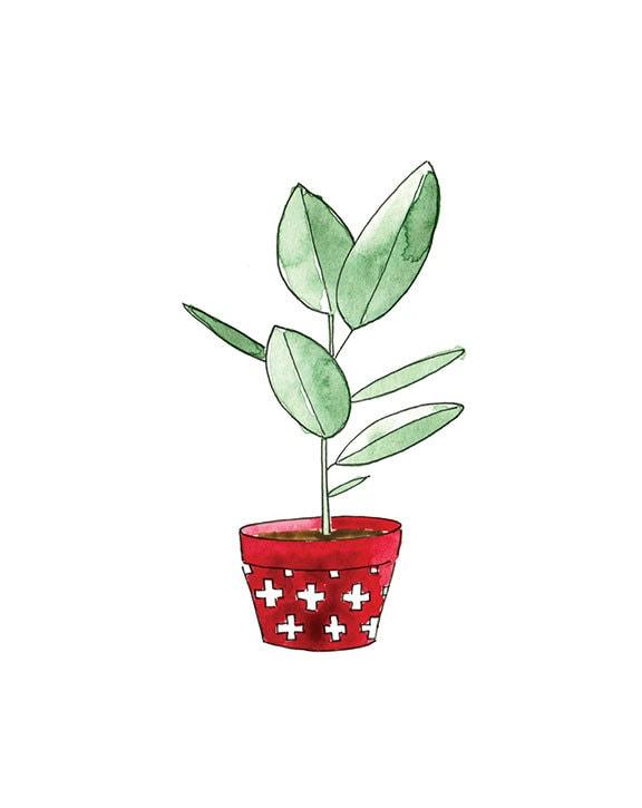 Succulent 2 print