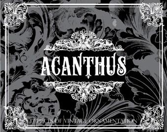Acanthus: Vintage flourish ornaments Clipart, Photoshop Brushes, and Vectors