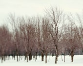"""Nature photography winter landscape woodland forest trees bare branches - """"Winter walk"""" 8 x 10"""