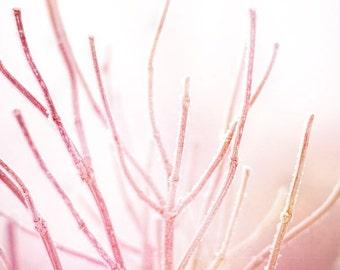 "Dreamy nature print pink pastel pale blush white winter - ""Frozen branches"" 8 x 10"