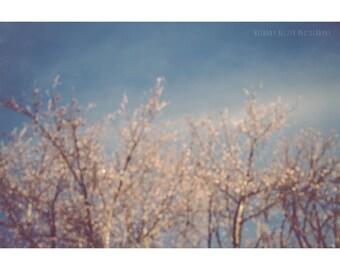 Nature Photography Bokeh Tree Photography Winter Photography Tree Print Blue Decor Landscape Photography Dreamy Photography Wisconsin Art