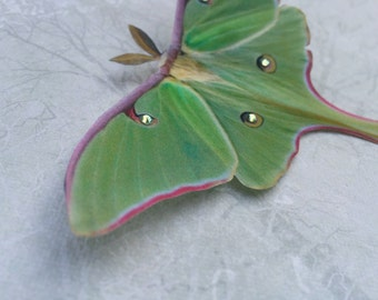 Silk Luna Moth Hair Clip. Hand cut from silk with Swarovski Crystals