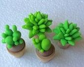 Four tiny Succulents for dollhouse or fairy garden