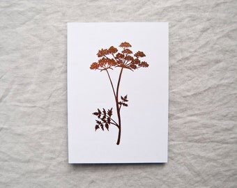 Cow Parsley botanical print in metallic copper foil leaf botany shiny limited edition 'Botanique Electrique' collection