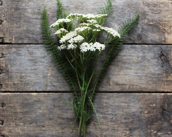 Yarrow, heirloom organic seeds, from our farm,  herb garden, organic herbs, spring planting, natural pest control, herbology, herbalism