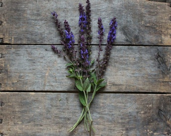 Salvia Caradonna, organic flower seeds, heirloom seeds, from our farm, flower seeds, gardener gift, for the cottage garden