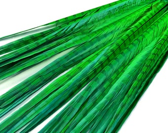 """Pheasant Feathers, 50 Pieces - 20-22"""" BRIGHT GREEN Long Ringneck Pheasant Tail Wholesale Feathers (bulk) : 3983"""