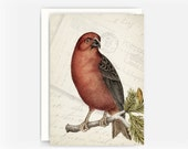 """Vintage Bird Etching Collage Greeting Card No. 3, Blank Note Card, 5""""x7"""" Note Card"""