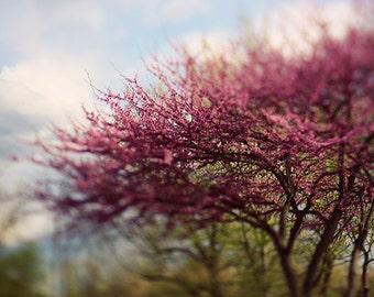 "Landscape Photograph ""Spring is in the Air"" Redbud Tree Fine Art Print. Tree, Wall Art, Nursery Art, Nature."