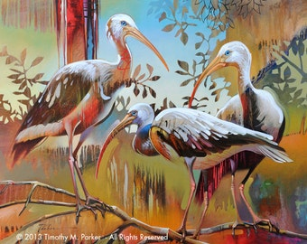 Contemporary Tropical Bird Art - Modern Bird Painting - Tropical Bird Reproduction - IBIS EMERGING - Florida Ibis