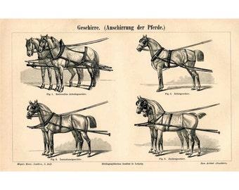 1894 ANTIQUE HORSE LITHOGRAPH harness horses original antique animal print