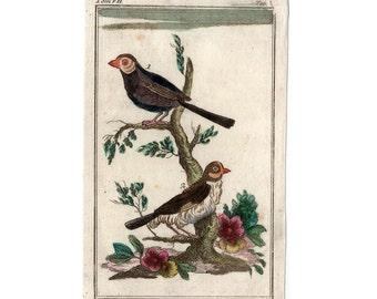 1790 EXOTIC BIRDS ENGRAVING original antique ornithology bird print - rare!