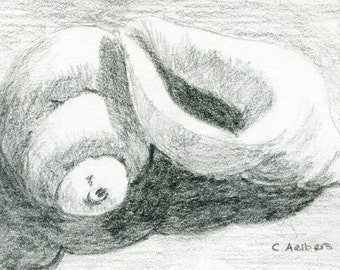 Seashells Original Pencil Sketch - 4 x 6 Art for Sale