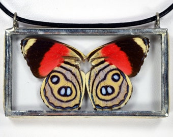 Real Butterfly Necklace - Callicore Hystaspes - Glass And Lead Free Solder