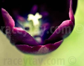 Spring Tulip Print, Flower Photography, Green, Purple, Bedroom Decor, Purple Tulip, Vivid, Jewel Tones