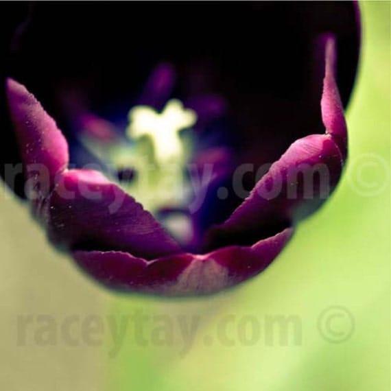 Spring Tulip Print, Flower Photography, Green, Purple, Bedroom Decor, Purple Tulip, Vivid, Jewel Tones