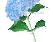 blue hydrangea watercolor flower painting archival print