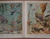 OCEAN  a Pair of Vintage French SEALIFE ILLUSTRATIONS by Vignerot Demoulin art prints from Nouveau Larousse Illustre 1932