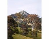 Tree Photography, Landscape, Mountainside, Watercolour, Blush Pink, Clay, Lime, Burnt Orange-Pastel