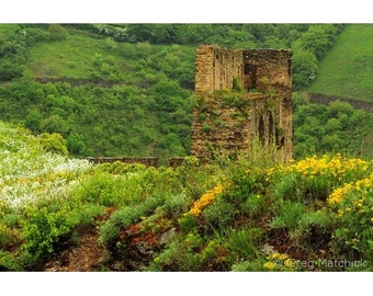 Fine Art Color Landscape Photography of Rheinfels Castle Ruins and Wildflowers in the Rhine River Valley in Germany 1