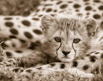Baby Animal Nursery Art Print, Vintage CHEETAH BABY PHOTO, Sepia Print, Baby Animal Photography, Wildlife Photography, Wall Decor,  Cat