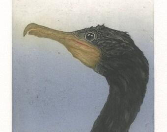 Double Crested Cormorant, original etching of Pacific coast sea bird